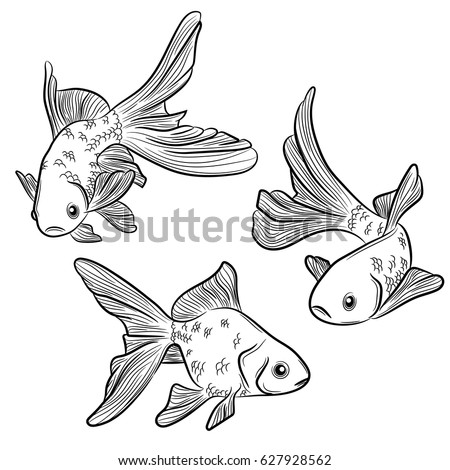 set of vintage sketch of goldfish hand drawn illustration in line art style