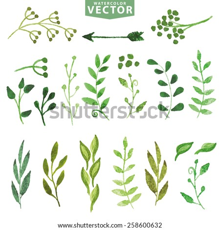 Set of watercolor green branches and laurels. Hand painted branches,leaves,petal decor elements.For design template,invitation.Watercolor Hand sketched brushes. Nature,organic items.Vector - stock vector