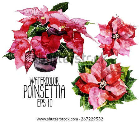 Set of watercolor poinsettias. Top, front views. Symbol of Christmas. Vector design element isolated on white background - stock vector