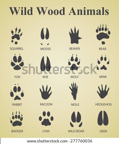 set of wild wood animal tracks - stock vector