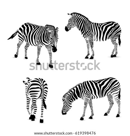 Zebra Stock Images Royalty Free Images & Vectors Shutterstock