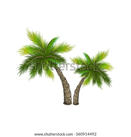 Set palm trees isolated on white. Vector illustration
