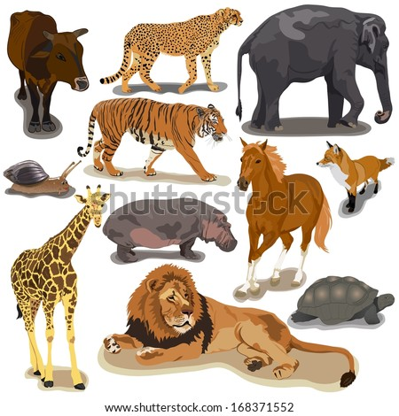 Set with animals on white background - stock vector