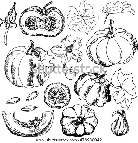 Set with hand drawn pumpkins, flowers, leaves and seeds. Vector
