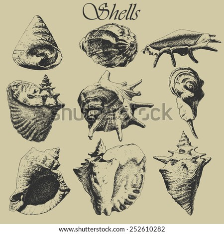 Set with realistic shells. Hand drawn. - stock vector