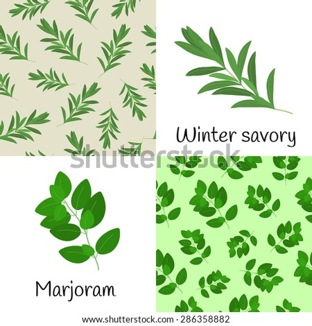 Set with winter savory and marjoram. Seamless patterns with winter savory, marjoram and hand drawn winter savory, marjoram. - stock vector