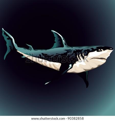 shark - stock vector