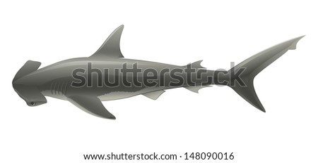 """Shark Hammer Head (Sphyrna) Isolated on White """"Full compatible gradients."""" - stock vector"""