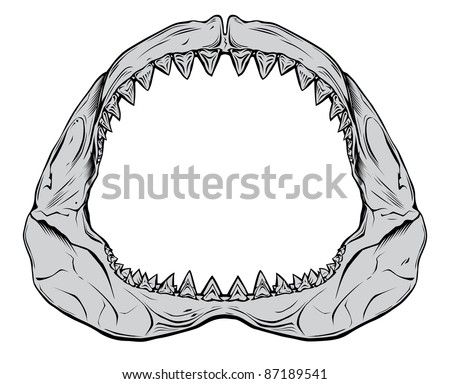Shark jaw isolated on white - stock vector