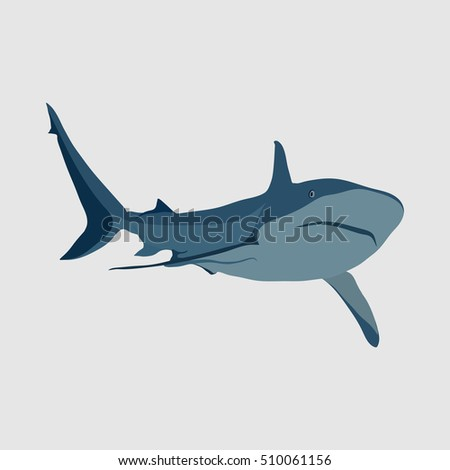 shark on a white background, the danger in the ocean, marine animal, flat design, vector image