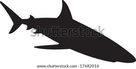 shark, vector - stock vector