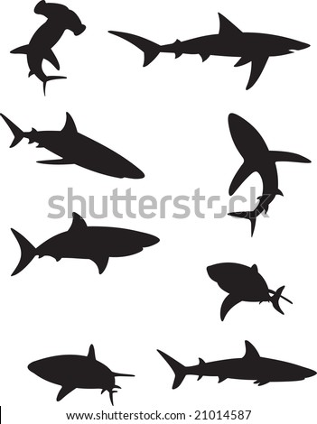 shark vector - stock vector