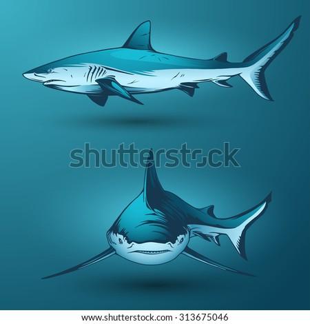 Shark jaws vector