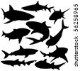 Sharks silhouette vector illustration. - stock photo