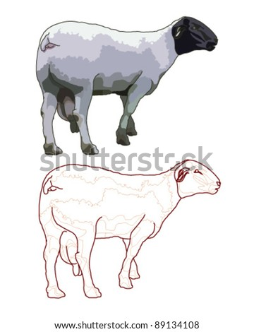 Sheep isolated - stock vector