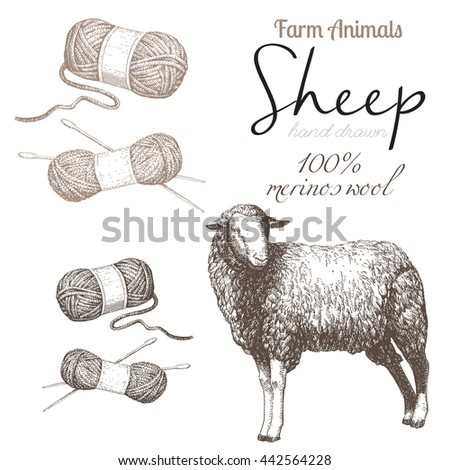 Sheep 1 Sheep Breeding Set Vector Stock Vector 442564228