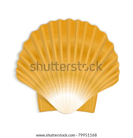 Shell, detailed vector - stock vector