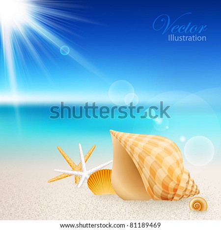 Shells and starfishes on the beach. Vector illustration. - stock vector