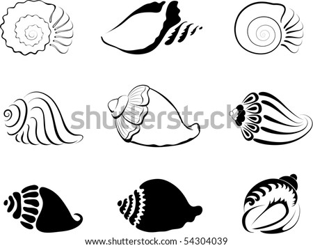 Shells. Element  for design vector illustration. - stock vector