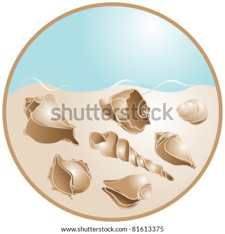 Shells on sand - stock vector