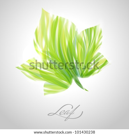 Shiny green striped maple leaf. Vector illustration.