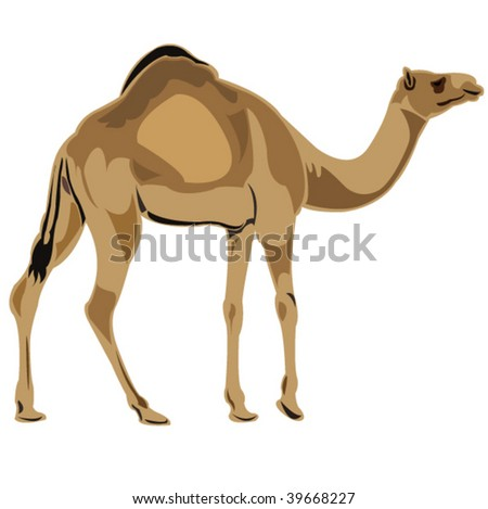 Ship of the desert dromedary camel - stock vector