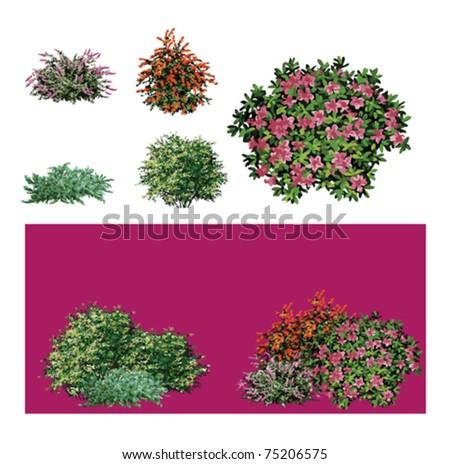 Shrub flower - stock vector
