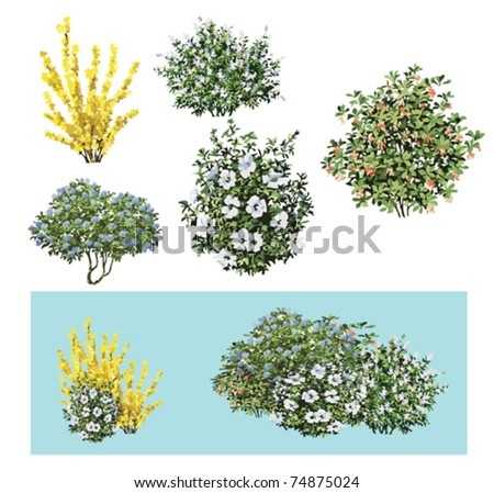 Shrub flower No3 - stock vector