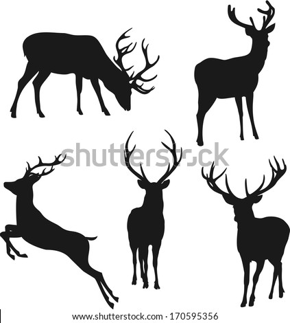 silhouette deer on white background - stock vector