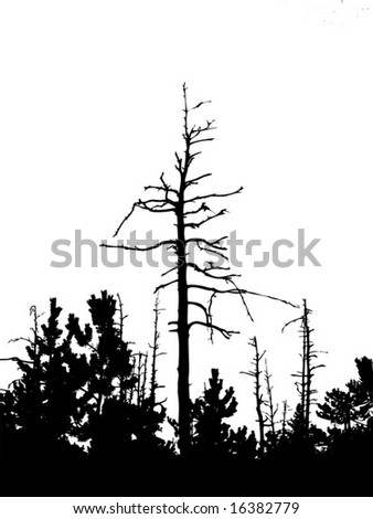 silhouette dry tree isolated on white background - stock vector