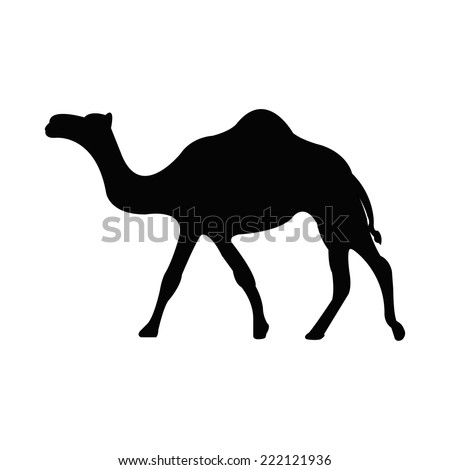 Silhouette of a camel - stock vector