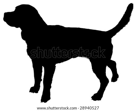 Silhouette of a dog of breed beagle - stock vector