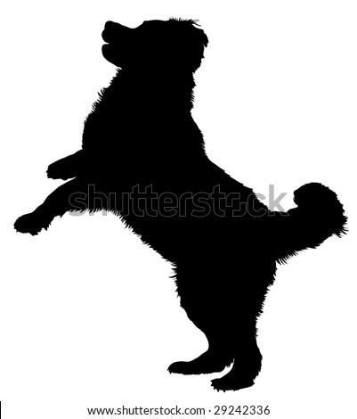 Silhouette of a dog of breed Bernese Mountain Dog