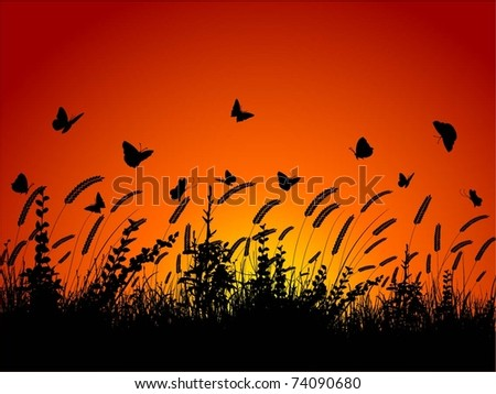 Silhouette of butterflies flying amongst wheat and plants