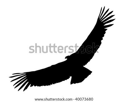 silhouette of condor - stock vector