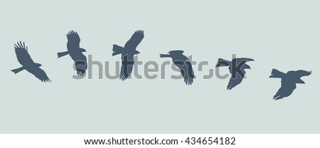 Silhouette of flying eagle  - stock vector