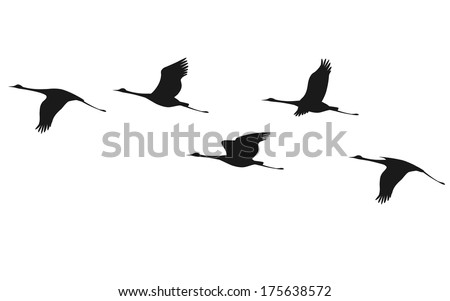 Silhouette of flying flock of cranes.  - stock vector