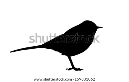 Silhouette of the bird (Wagtail) standing.