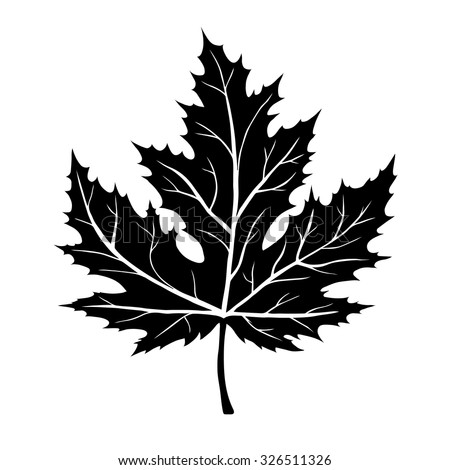 Maple Leaf Outline Stock Images, Royalty-Free Images ...