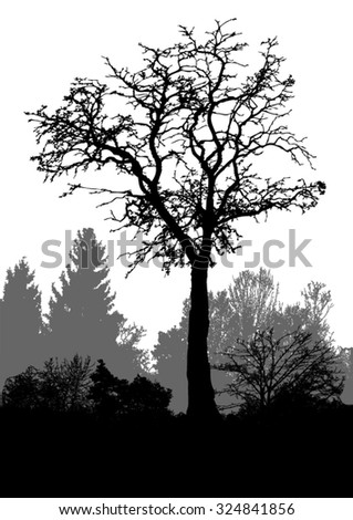 Silhouette of tree, bush with bare branches. Winter scenery trees afar landscape and black space for text - vector