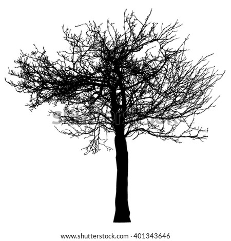 Silhouette of tree with bare branches -vector