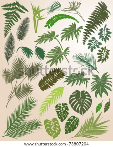 Silhouette of Tropical Leaves - stock vector