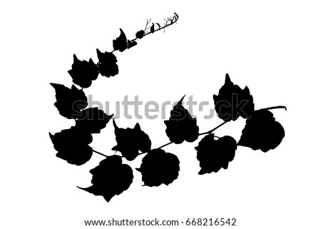 Silhouette of twig of decorative wild grape isolated on white vector illustration