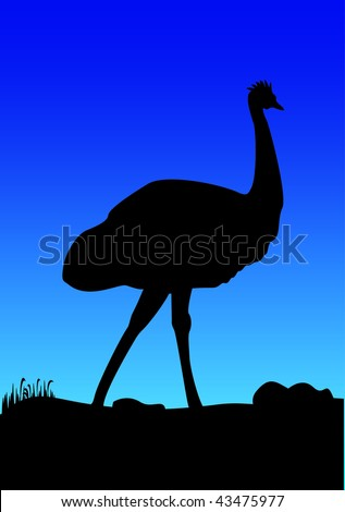silhouetted of an Australian emu