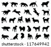 Silhouettes dog breeds 2-vector - stock vector