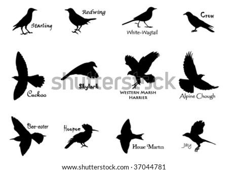 Silhouettes of birds - stock vector