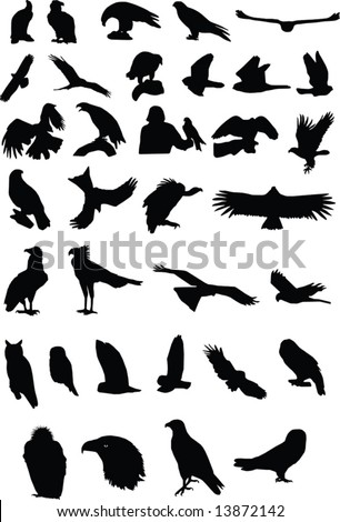 Silhouettes of birds of prey - stock vector