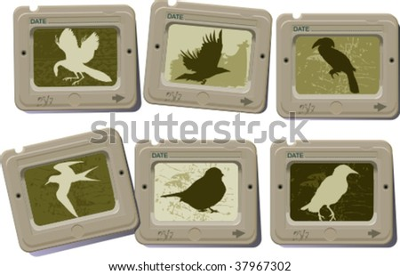 silhouettes of birds 1, vector illustration - stock vector
