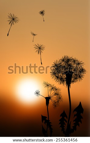 Silhouettes of fading dandelions at sunset - vector illustration - stock vector