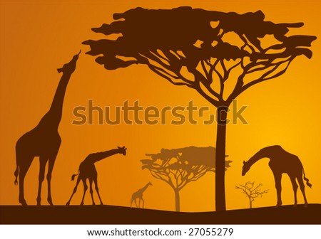 Silhouettes of giraffes in national park in sunset background - stock vector